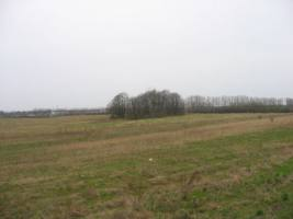 Alter Friedhof des Dorfes Paupiai