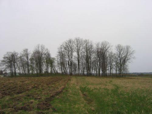 Alter Friedhof des Dorfes Virkuciai